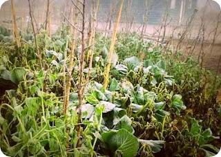 Tiga Kementerian akan Uji Dampak Pertanian yang Terkena Badai Hujan Salju di Pegunungan Tengah
