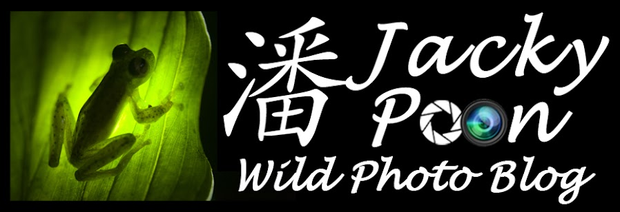 Jacky Poon Wild Photo Blog