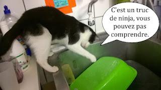 Beau chat noir et blanc sur le rebord d'un évier.