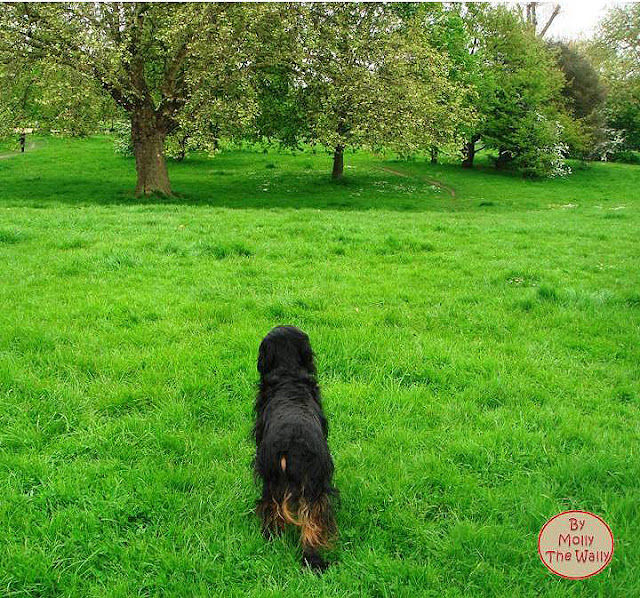 Molly The Wally Says Bark From The Park!