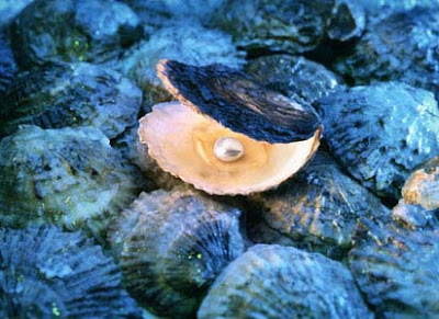 Lamelibranquios: ostras perlíferas o perleras