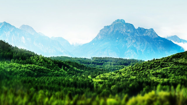Tilt Shift Forest Landscape HD Wallpaper