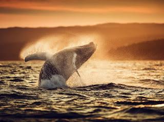Foto Terbaik National Geographic
