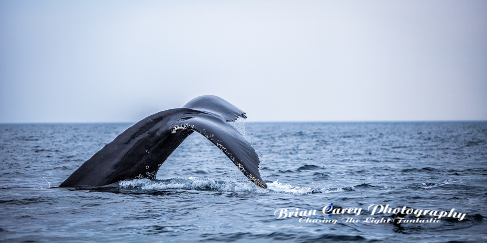 photography by Brian Carey, St John's, Newfoundland