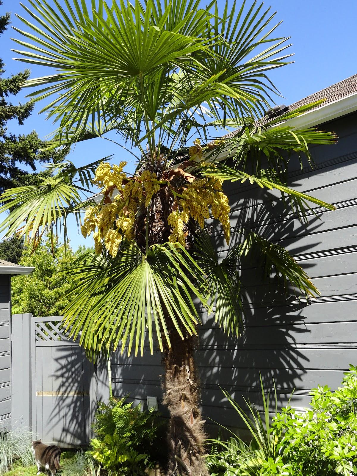 danger garden bloomday for may 2012. Black Bedroom Furniture Sets. Home Design Ideas