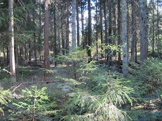 Abiotiske faktorer i skog