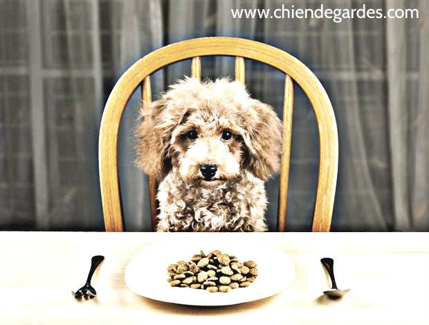 Avez vous un chien qui a perdu son appétit?