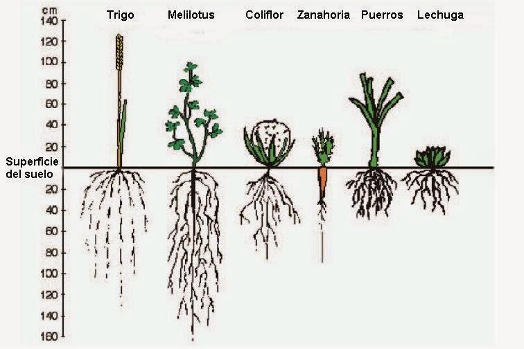 Proyecto biologia grado decimo marzo 2015 for Plantas hortalizas ejemplos