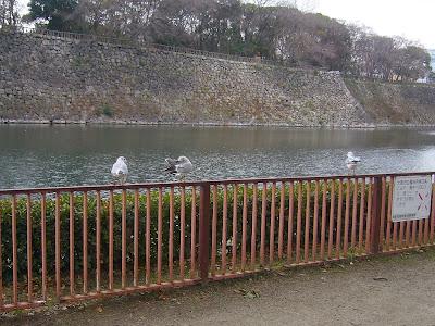 大阪城公園の水鳥たち 北外堀