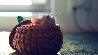 Lindo gatito en cesta