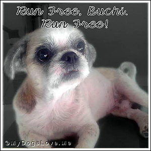 RUN FREE, SWEET BUCHI