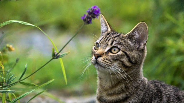 hình nền mèo con đẹp nhất thế giới