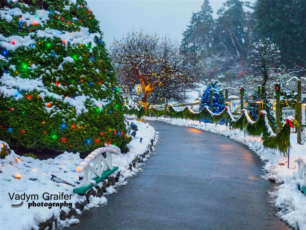 vadym graifer snow day at the butchart gardens