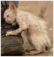 Помощь бездомным животным Луганска