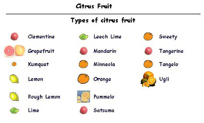 All Types Of Citrus Fruits List