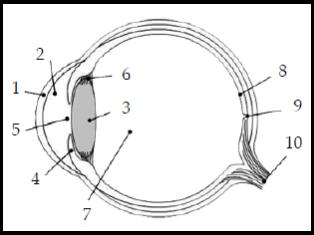 Kelas X | Alat Optik: Mata