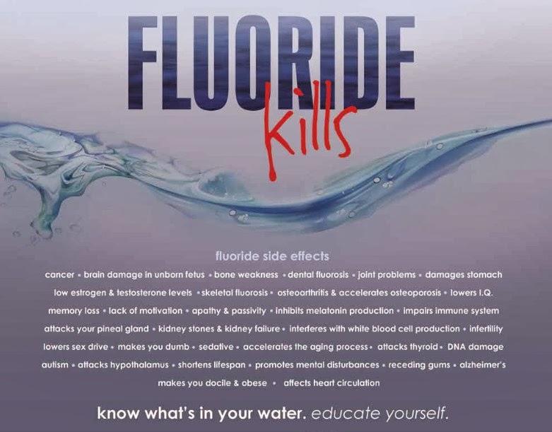 harvard study fluoride