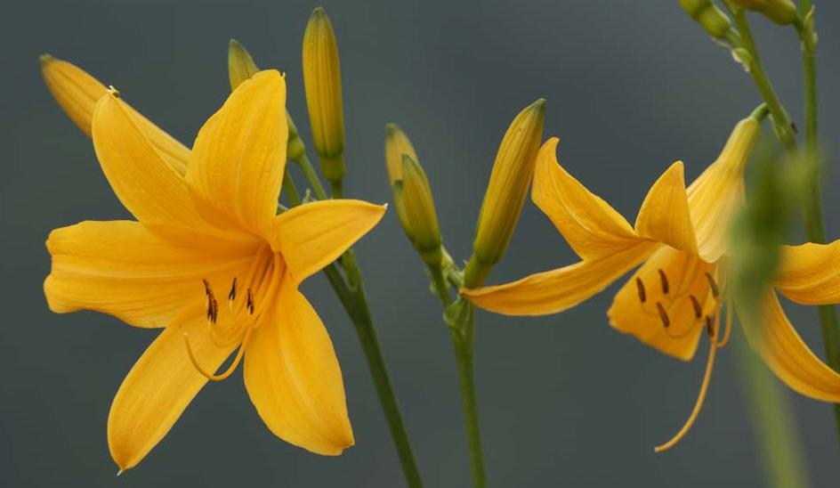 tipos de flores On clases de flores
