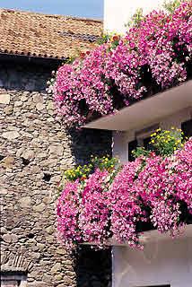 Alba hogar noviembre 2012 for Surfinia balcone