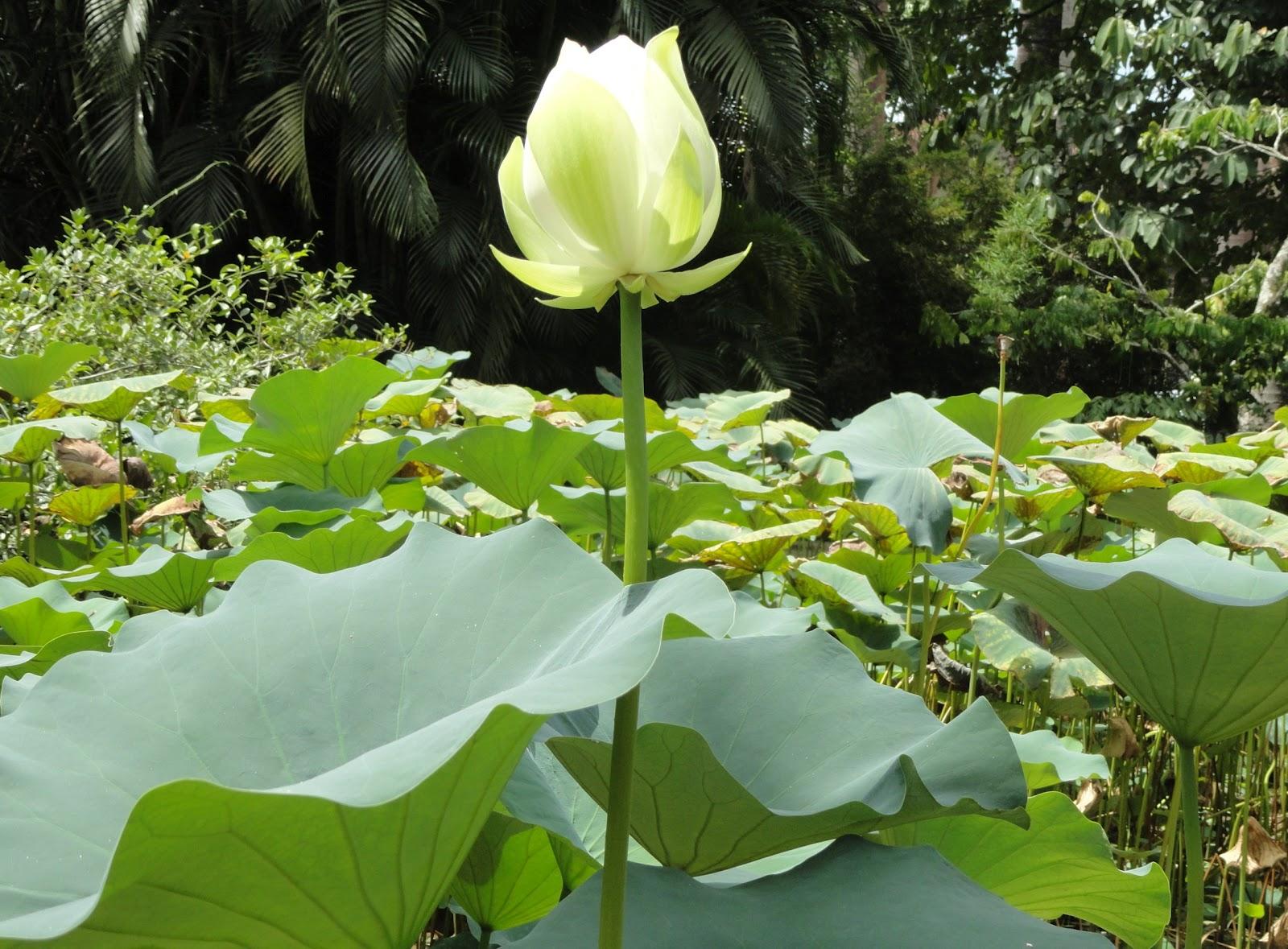 flores para jardim verao:Jardim Botânico e fiquei encantada com a beleza das flores