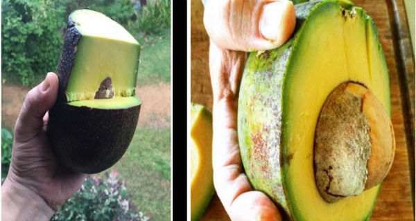 THIS IS WHY YOU SHOULD EAT AVOCADOS DAILY
