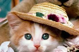 Main Dandan Kucing