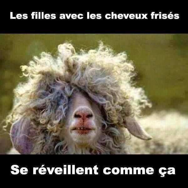 cheveux-frises-humour