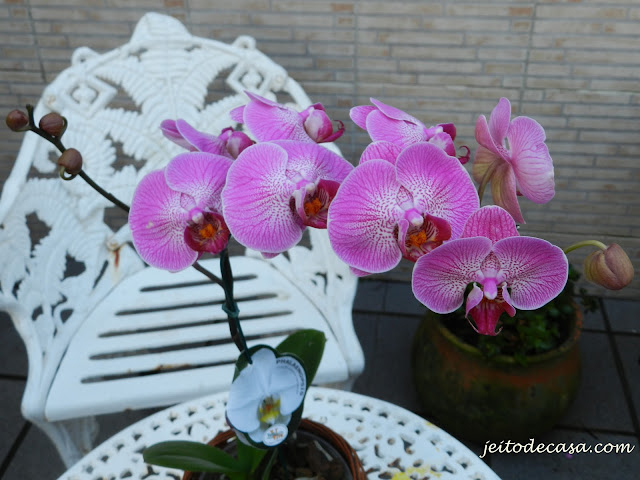 orquidea phalenopsis rosa-lilas