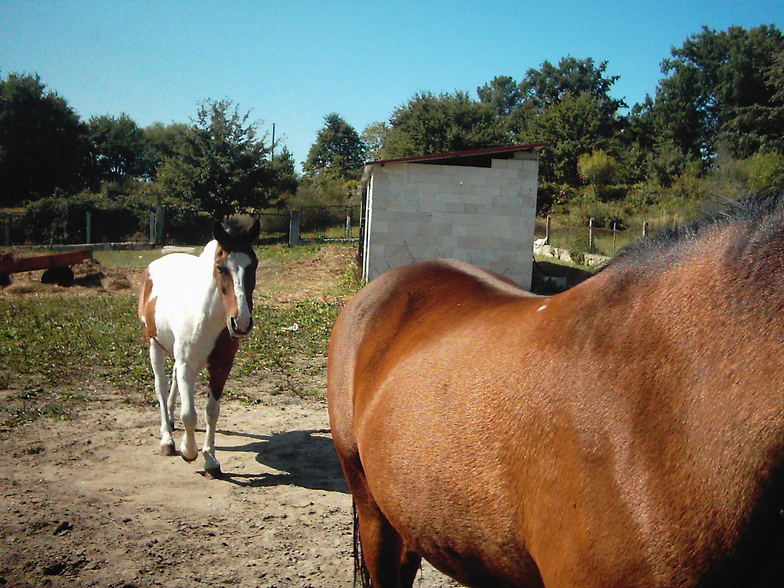 Chispa y Cuco, los caballos de María Jesús
