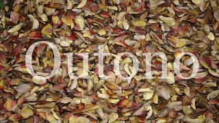 Outono em Texturas folhas