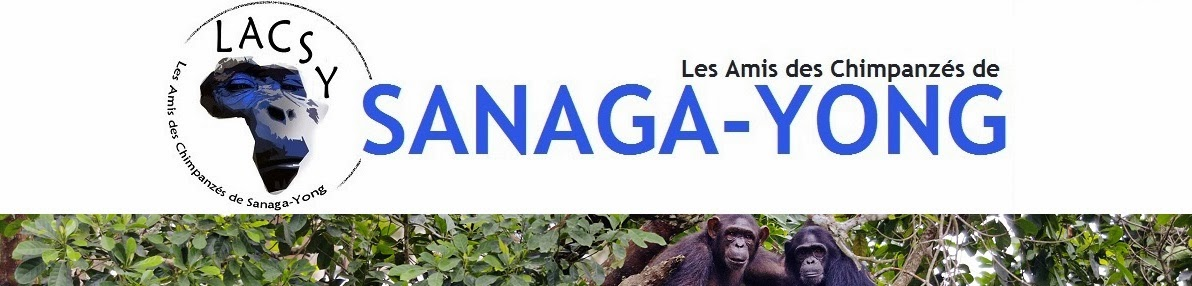 Les Amis des Chimpanzés de SANAGA-YONG
