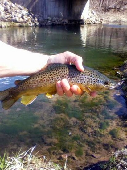 Minnesota driftless fly fishing trip report after work for Minnesota fishing trips