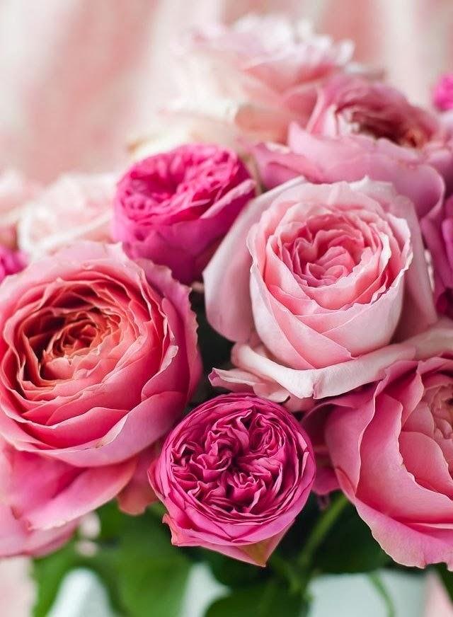 Цветы в вк
