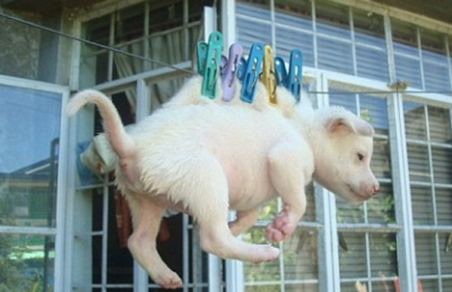 Dog And Its Puppies Are Hanged