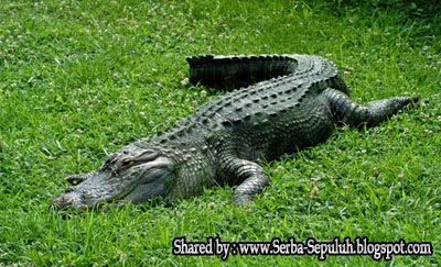 http://1.bp.blogspot.com/-FOWoFJpXNgU/TphqaQlZnEI/AAAAAAAAFNE/JOX1sfdKdpA/s1600/6.jpg
