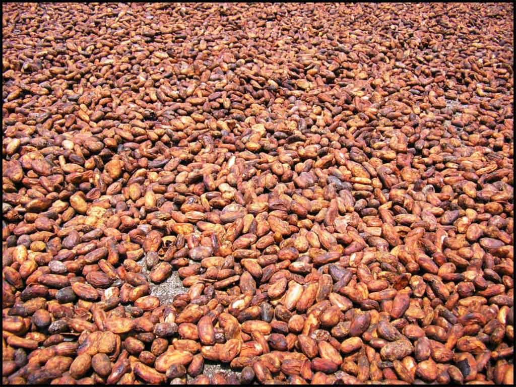 apetitoso cacao