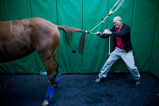 Thăm Quan Bệnh Viện Chữa Trị Cho Ngựa Ở Israel