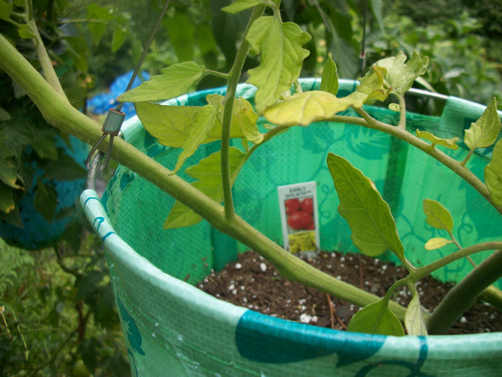 Cinj 39 s chat room miracle gro potting mix vs shulz for Potting soil vs garden soil
