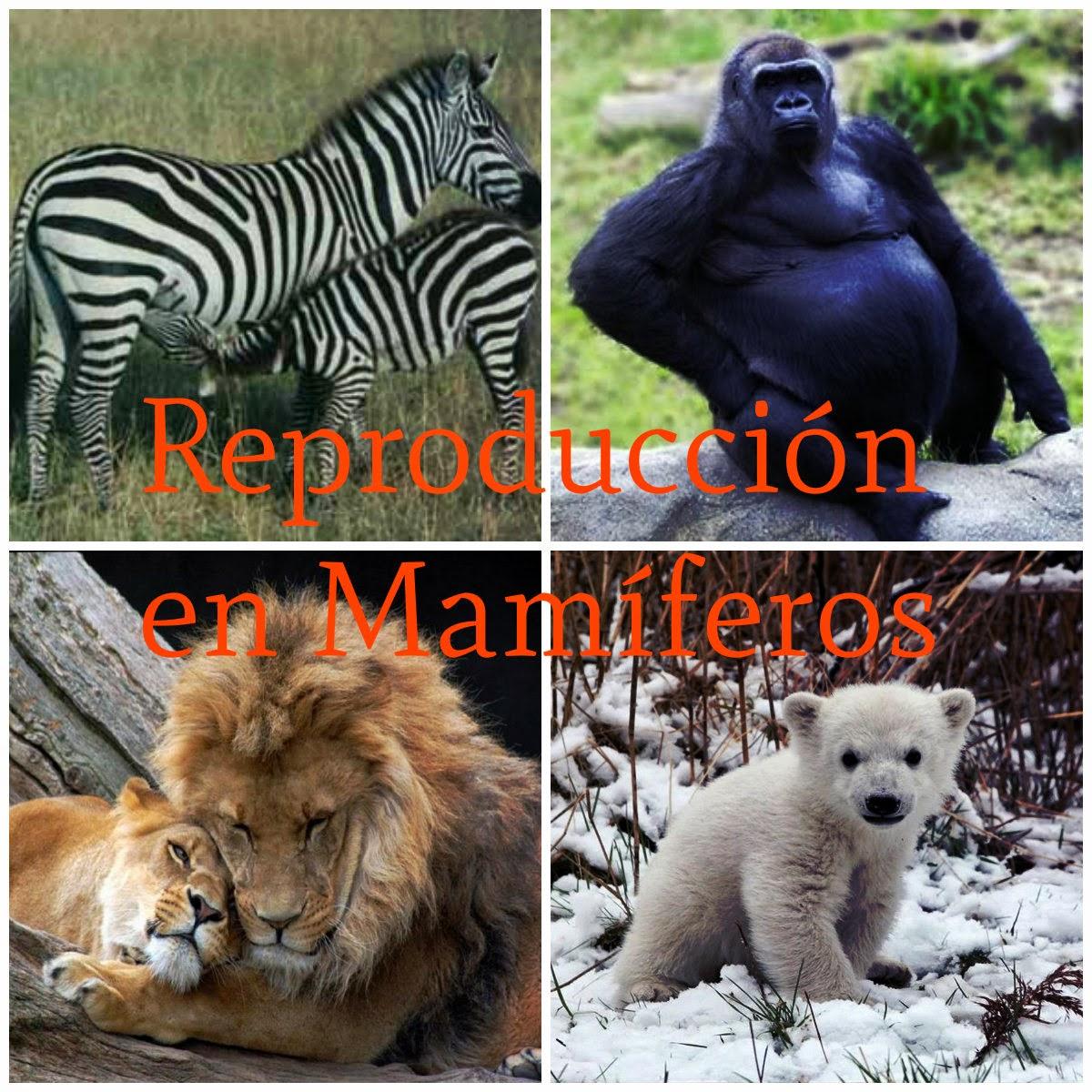 Reproducción en Mamíferos | ENIGMAS DE LA VIDA