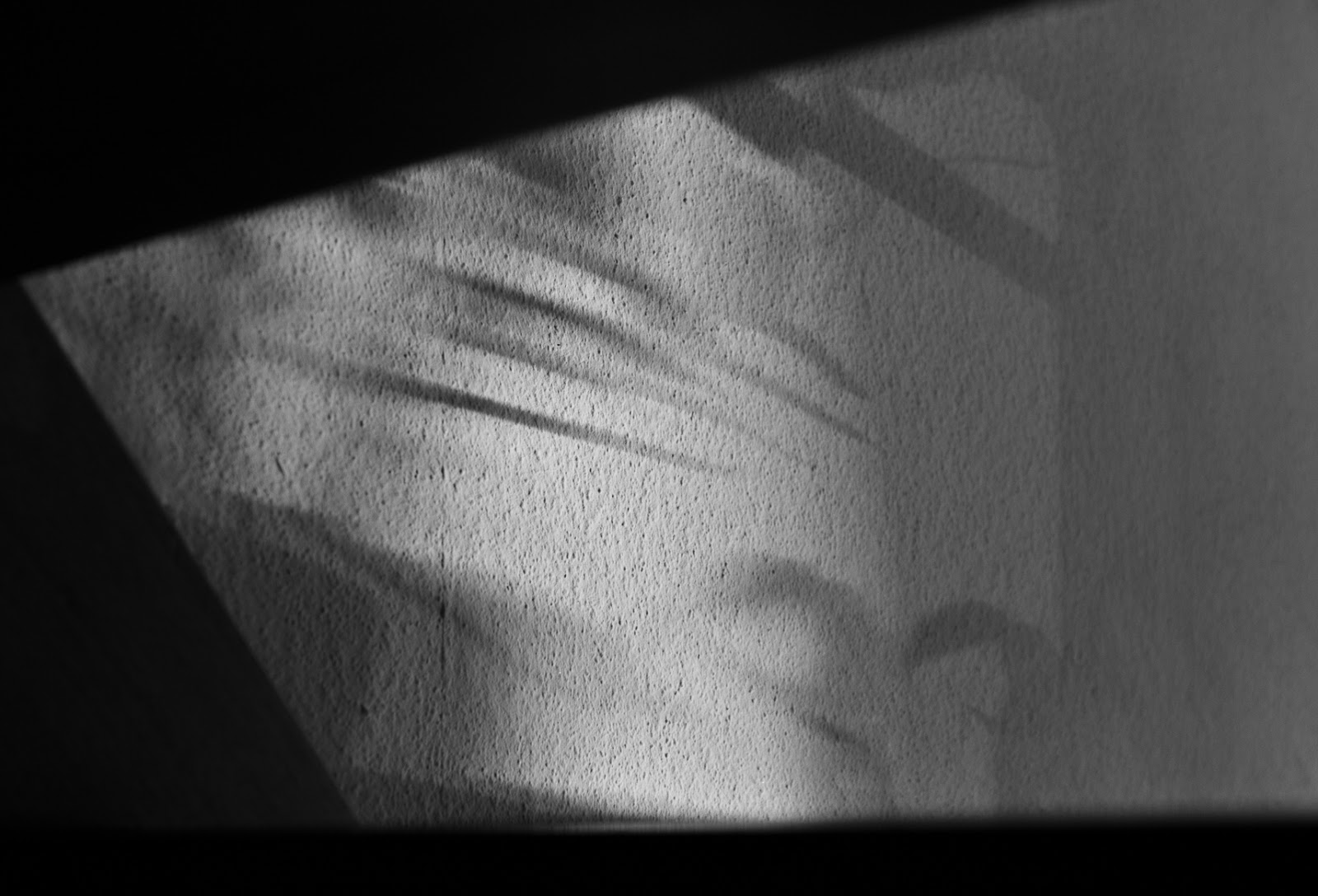 Matthew G. Beall vision driven black and white find art photography playing with shadows:: stairs, plants and a wall   2014