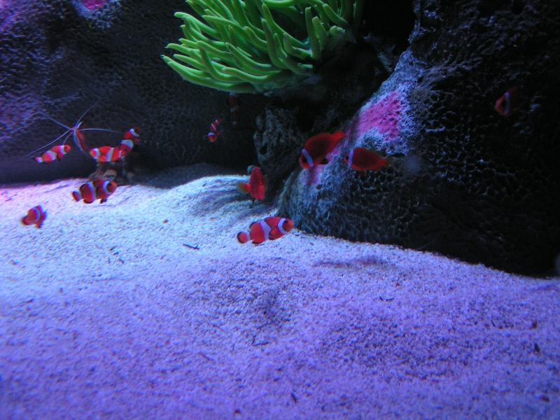 Rocks In My Sandals Sea Life Aquarium Grapevine Texas