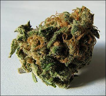 Cannabis é a substância ilícita mais popular do mundo