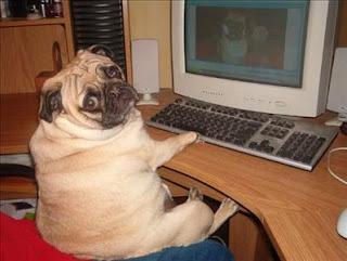 Pug computer Google images