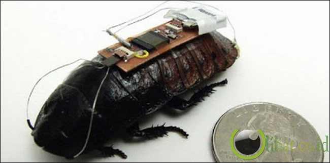 Kecoa Digunakan Untuk Menemukan Korban Bencana