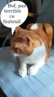 Gentil chat roux et blanc.