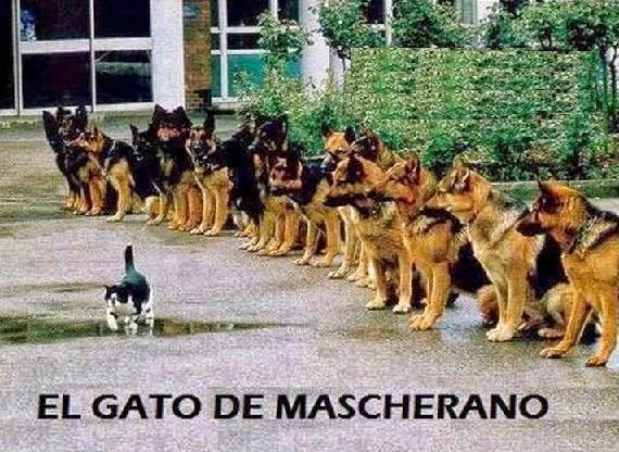 gato de Mascherano
