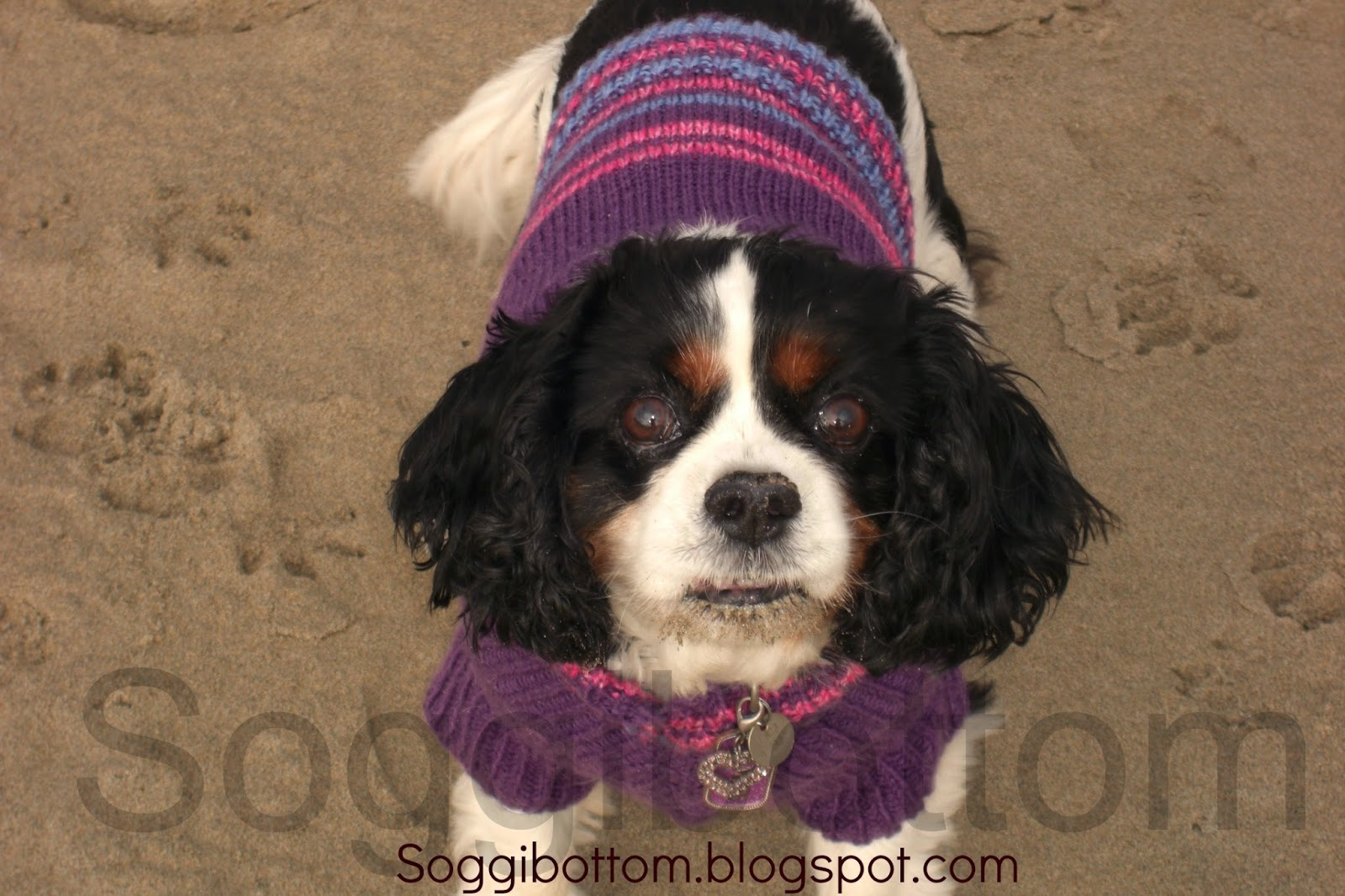 Soggibottom: Free Soggibottom knitted dog sweater pattern
