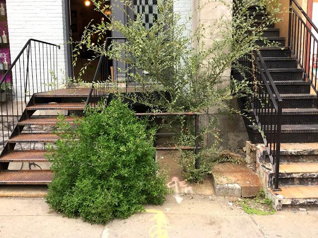 Terrasse Rouge St Denis : Flora Urbana Flore des trottoirs