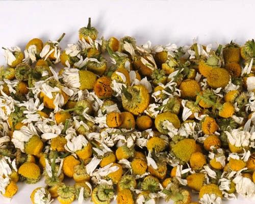 Invernablog la manzanilla y sus propiedades for Manzanilla planta medicinal para que sirve