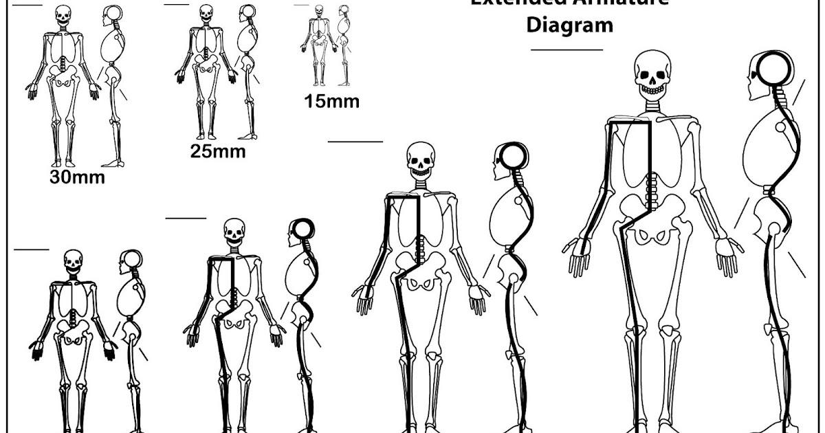 Human Skeleton Building Games